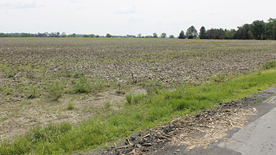 A field east of Delphos remains unplanted like most in Allen, Auglaize, Paulding, Putnam, Mercer and Van Wert counties. (DHI Media/Rebecca Violet)